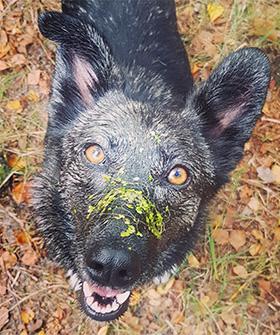 Zelfbeheersing bij honden