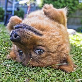 Hebben honden een gevoel voor humor?