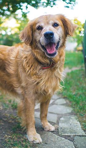 Hondenlach