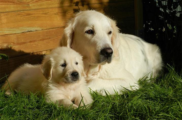 Puppy met moeder