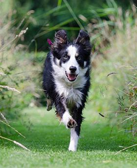 Vitale, gezonde hond