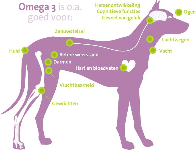 Voordelen Omega 3 voor je hond