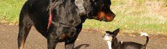 Ontmoeting tussen honden