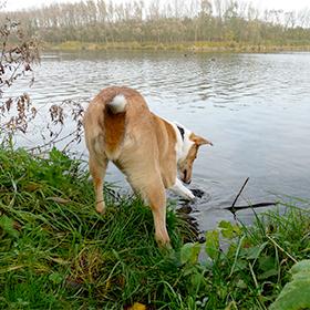 Hond wil zwemmen