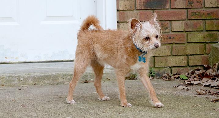 Hond: Amble