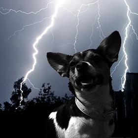 Hond bang voor harde geluiden
