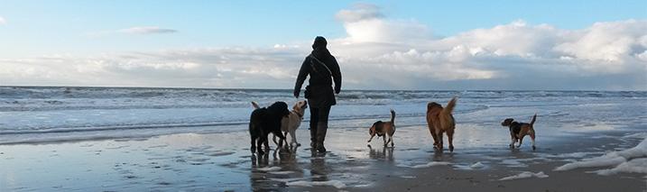 Honden los op het strand