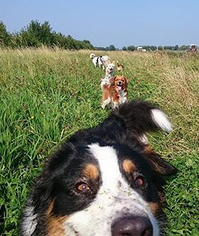 Hondenuitlaatservice
