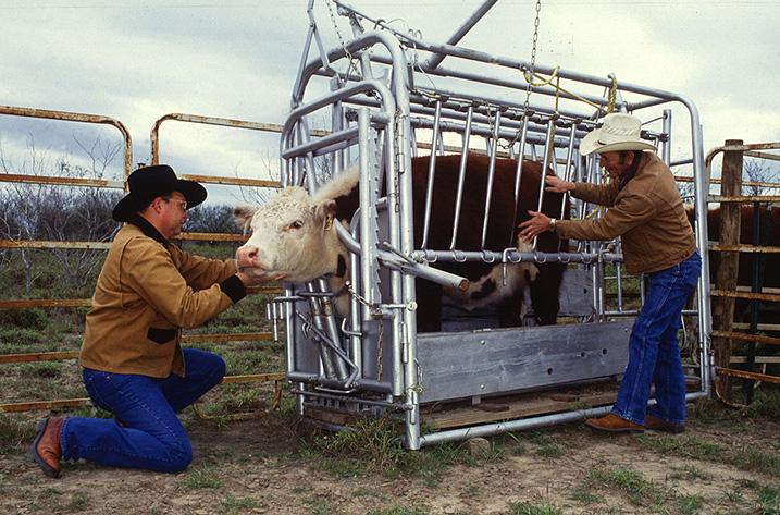 Hug machine voor vee