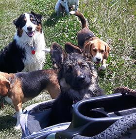 Puppy in een buggy