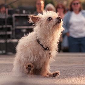 Hond heeft last van anaalklieren: sleetje rijden