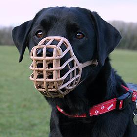 Hond en aansprakelijkheid