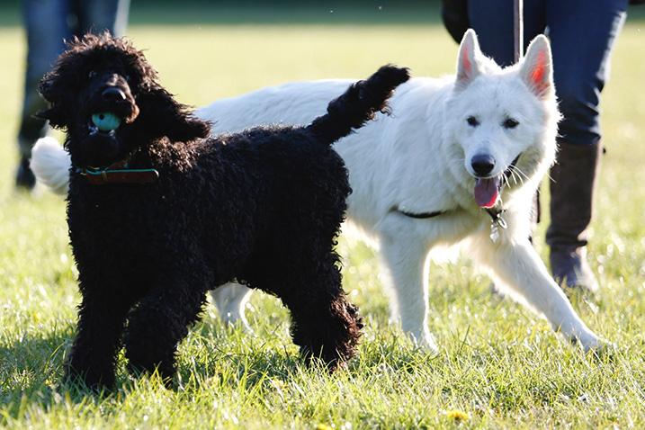Interactie tussen 2 honden