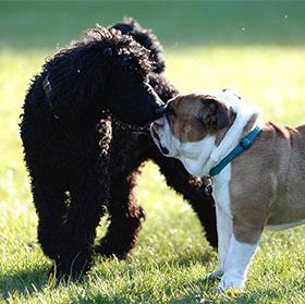 Ontmoeting tussen 2 honden