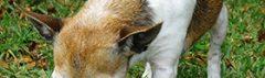 Hond kauwt op bot