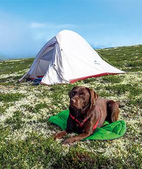 Hond voor de tent
