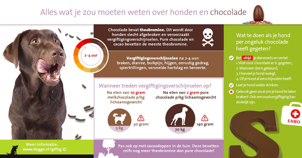 Honden en chocolade - infographic voor Facebook