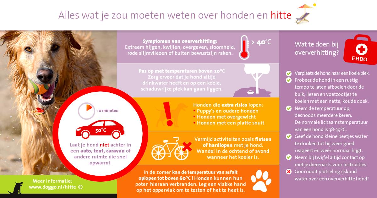 Honden en hitte - infographic voor Facebook