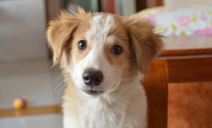 Pup zindelijk maken