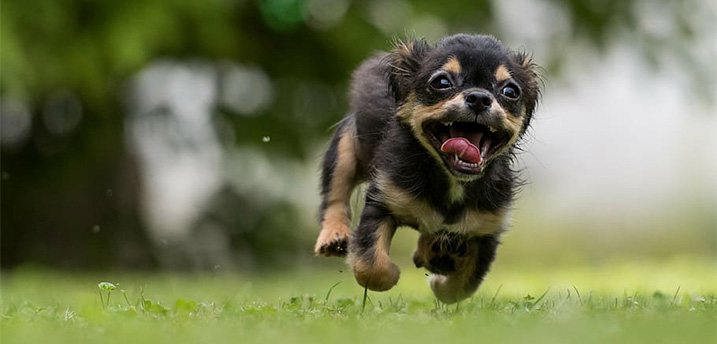 Puppy hyper