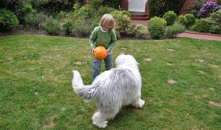 Kind speelt met hond