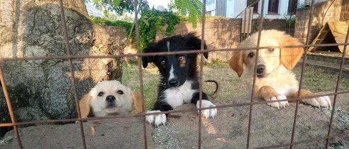 Buitenlandse honden