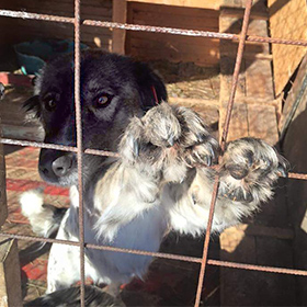Hond in uit het buitenland adopteren