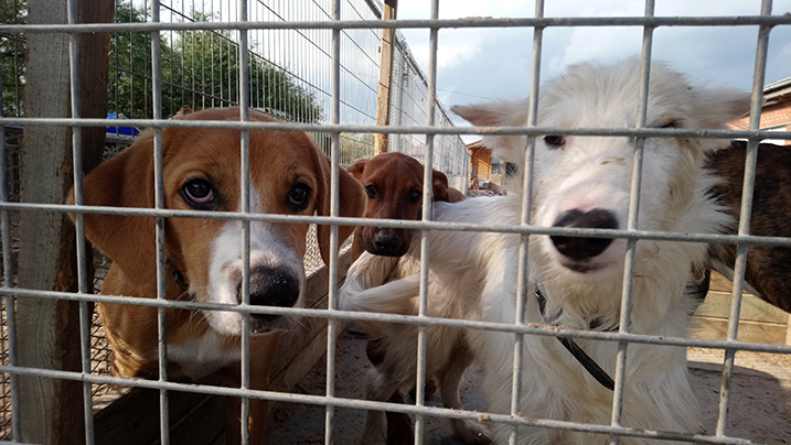 Honden in shelter