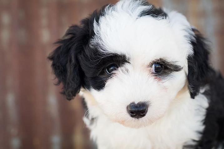 War kost een puppy?