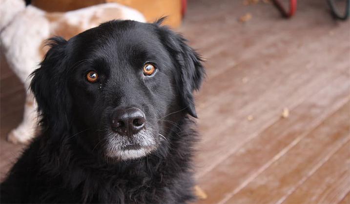 Herplaatsen van je hond