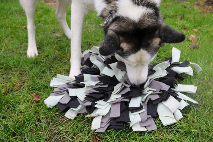 Hond met snuffelmat