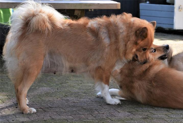 Moederhond