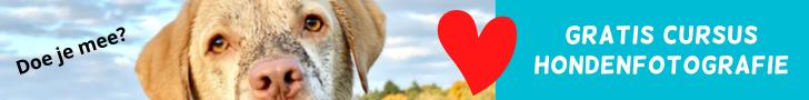 Hondenfotograferen met je smartphone