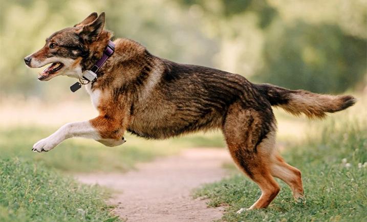 Buitenlandse hond met GPS-tracker