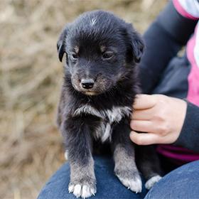 Puppy uit het buitenland