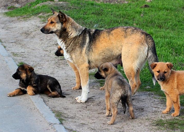 Straathond met puppy's