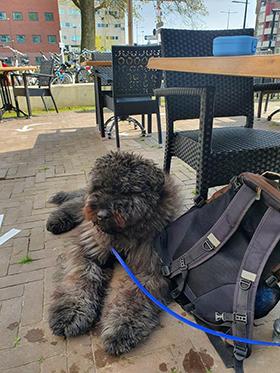 Terras training hond