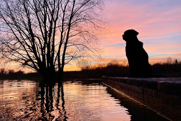Foto hond zonsondergang