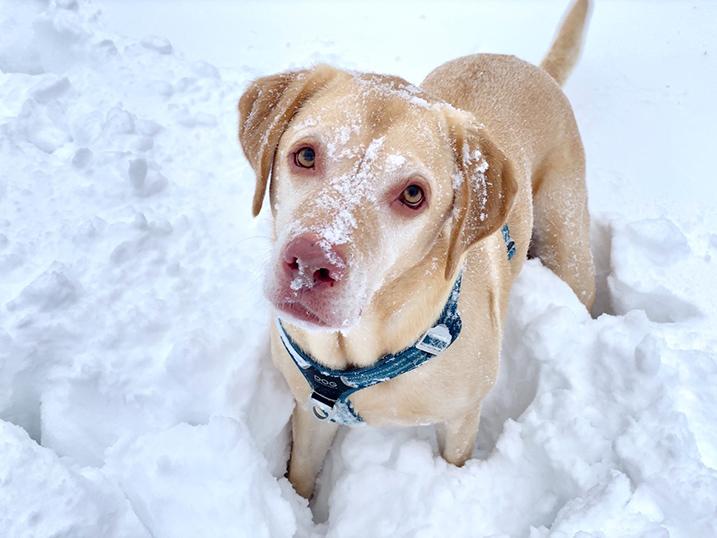 Foto van hond in de sneeuw