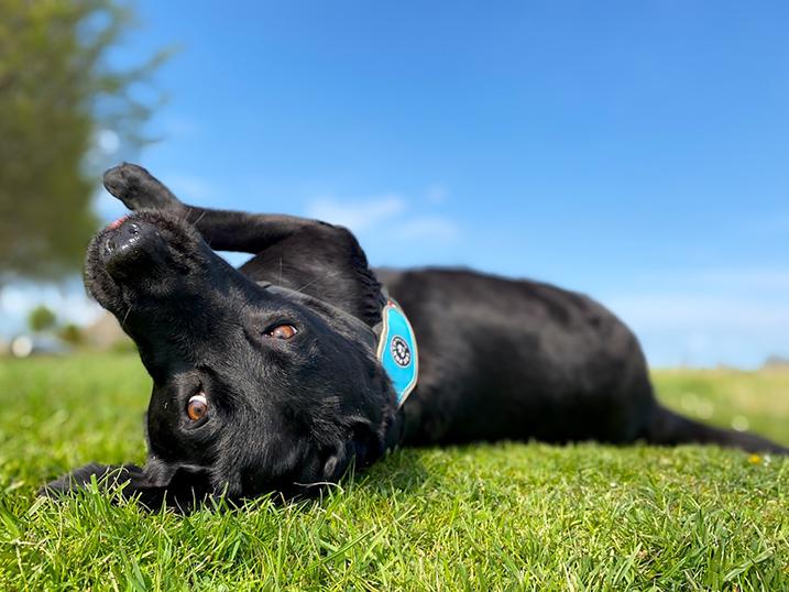 Hond op de foto
