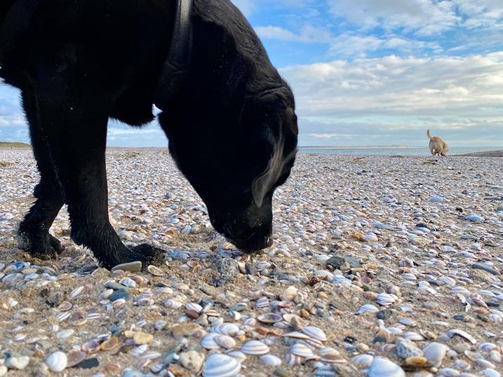 Strandfoto hond