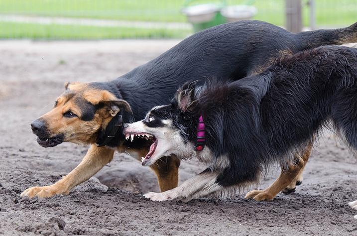Spel of agressie?